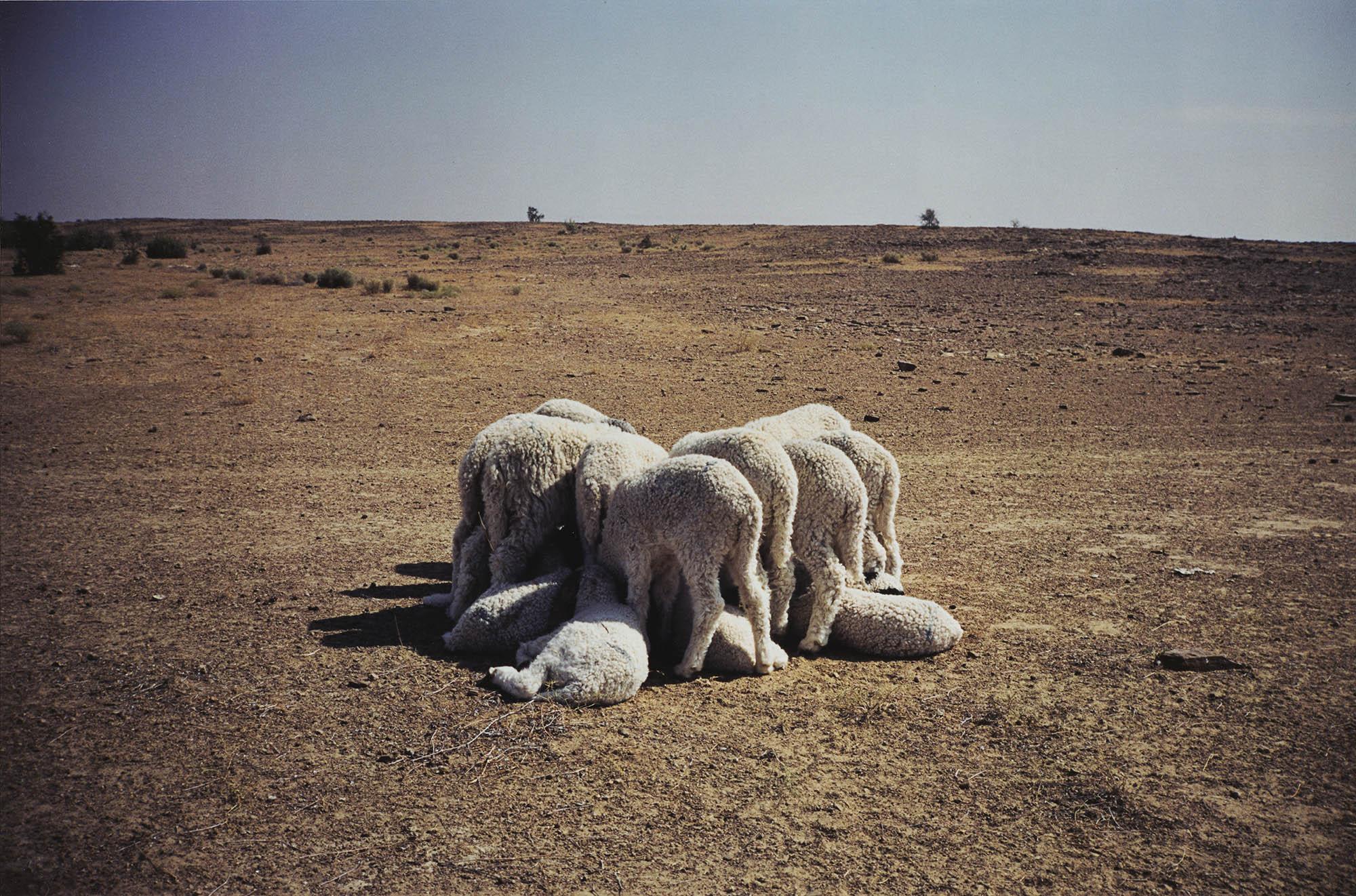 Gabriel Orozco, Common Dream, 1996