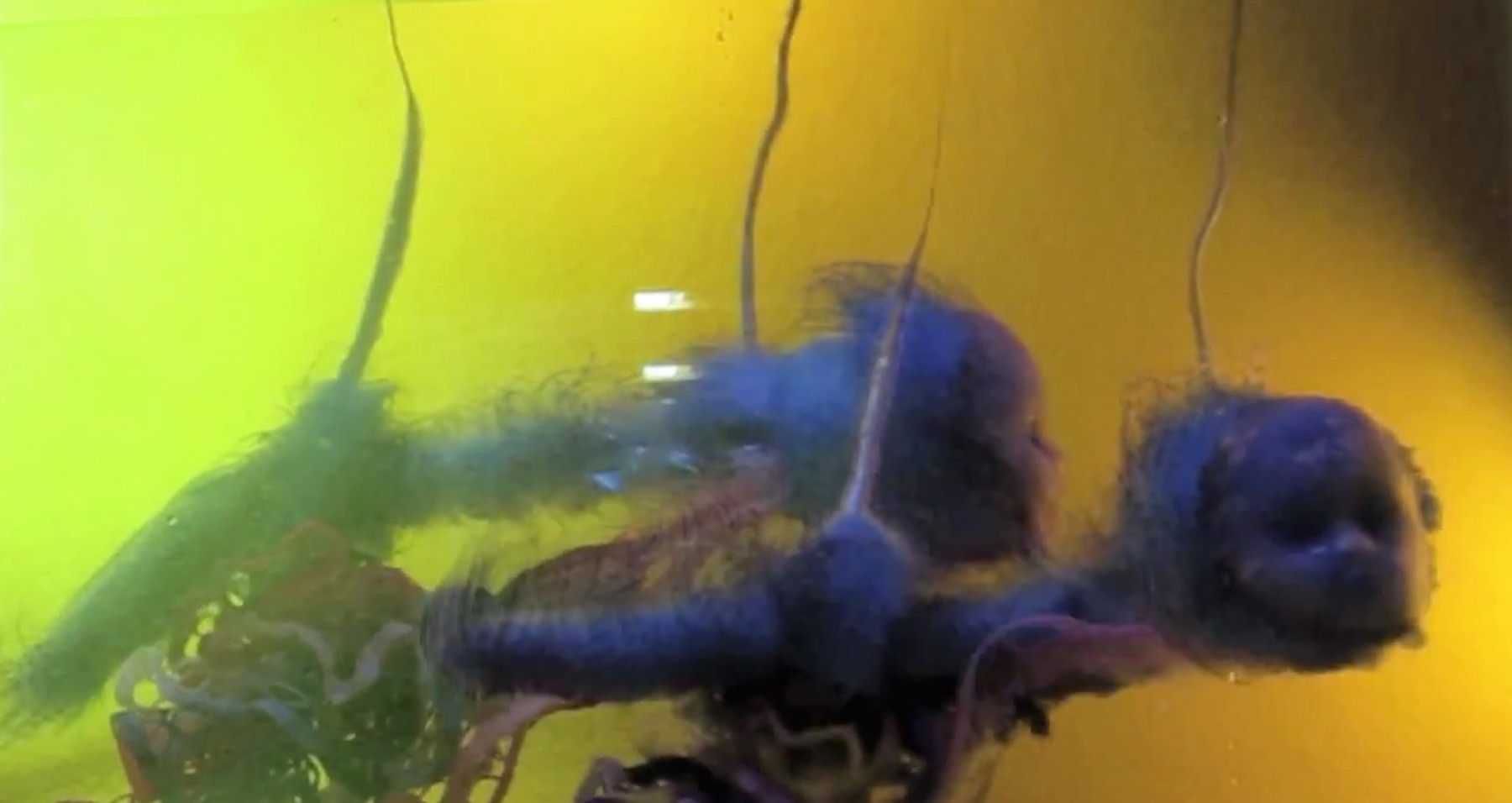 Underwater Prologue, video still. Courtesy of Southernmost Situations.