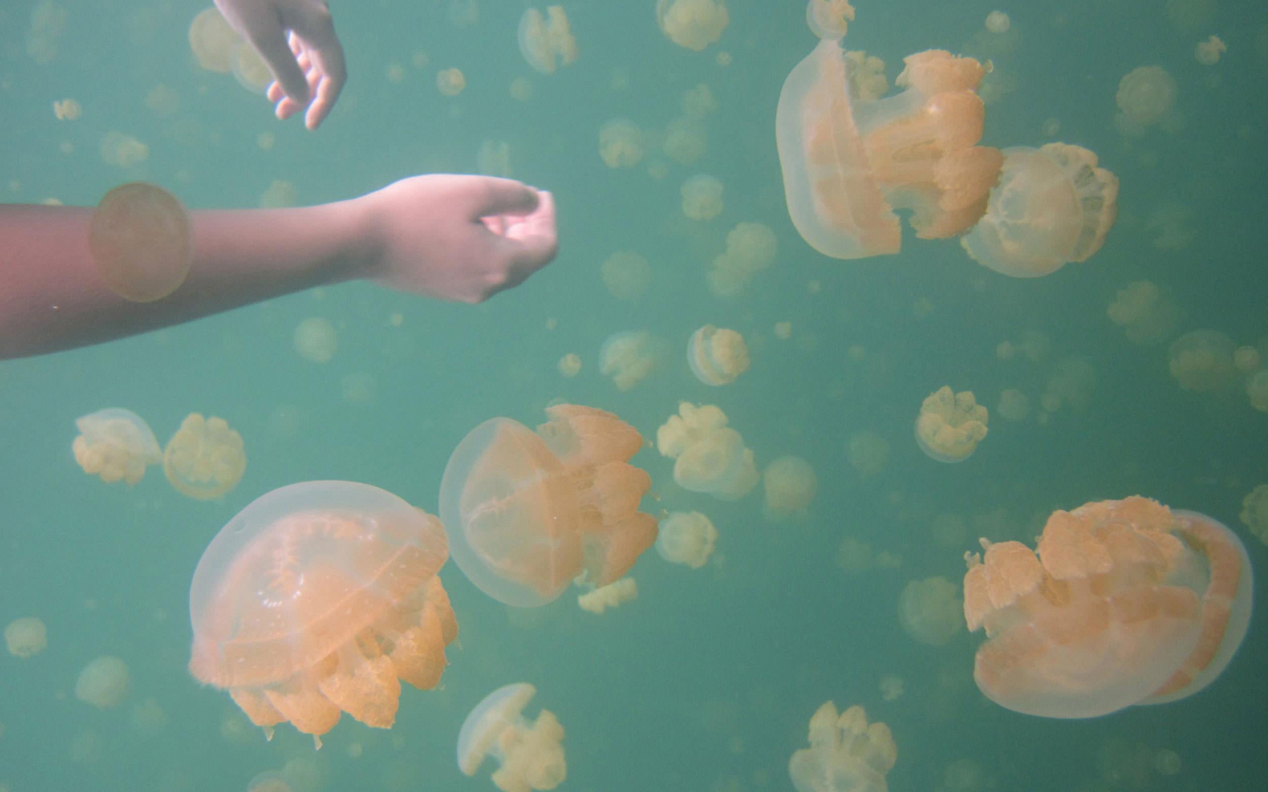 Image of Jellyfish Lake in Palau