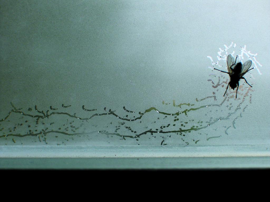 Tue Greenfort, Partitur einer Fliege : A Fly's Composition, 2004
