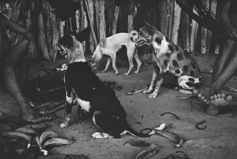 Lothar Baumgarten, In the Land of the Silent Dogs, 1984